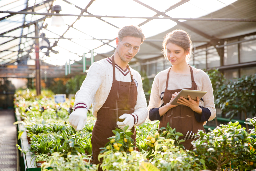 Gardening is like marketing. Serious male and female gardeners in brown aprons discussing plants and flowers and using tablet in orangery
