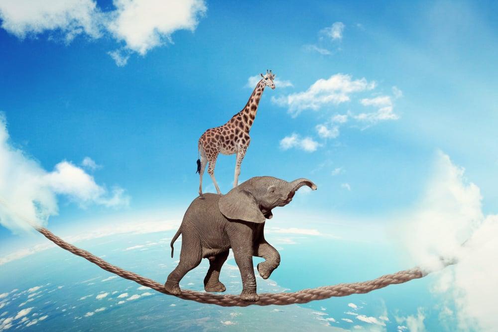 giraffe on elephant's back on tightrope - Stockphoto
